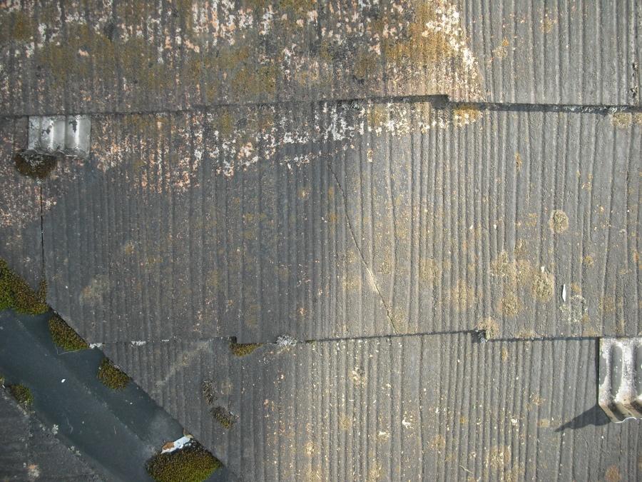 カラベスト現場調査