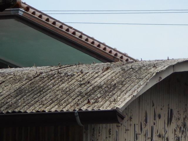 波トタン屋根調査