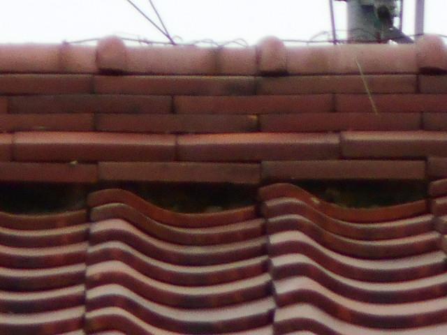 大垣市にて瓦屋根調査 棟瓦の銅線が切れて無くなっている状態でした。