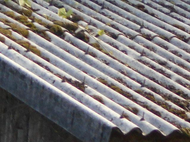 大波スレート屋根調査
