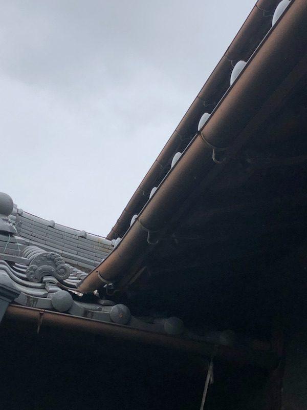 雨樋の現場調査